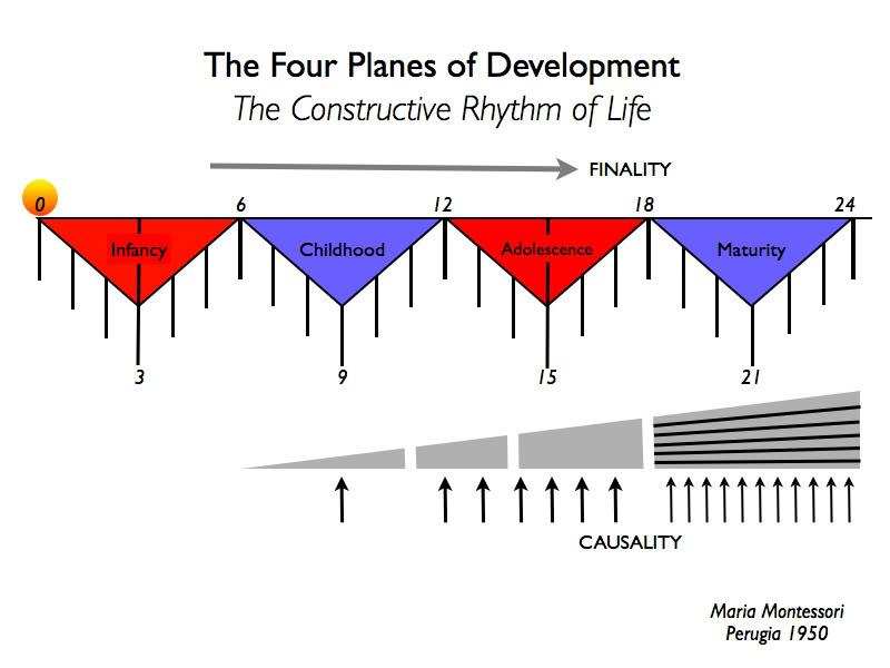 cuatro planos desarrollo montessori