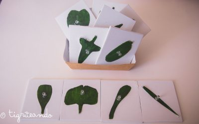 Gabinete de botanica DIY
