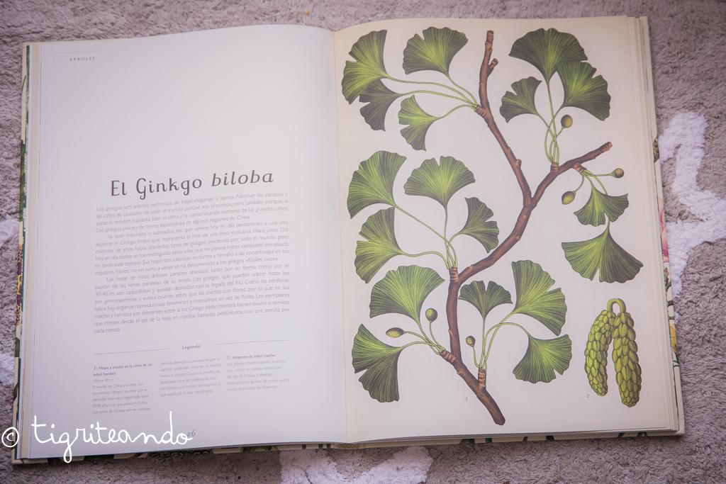 libros-conocimiento-navidad-7