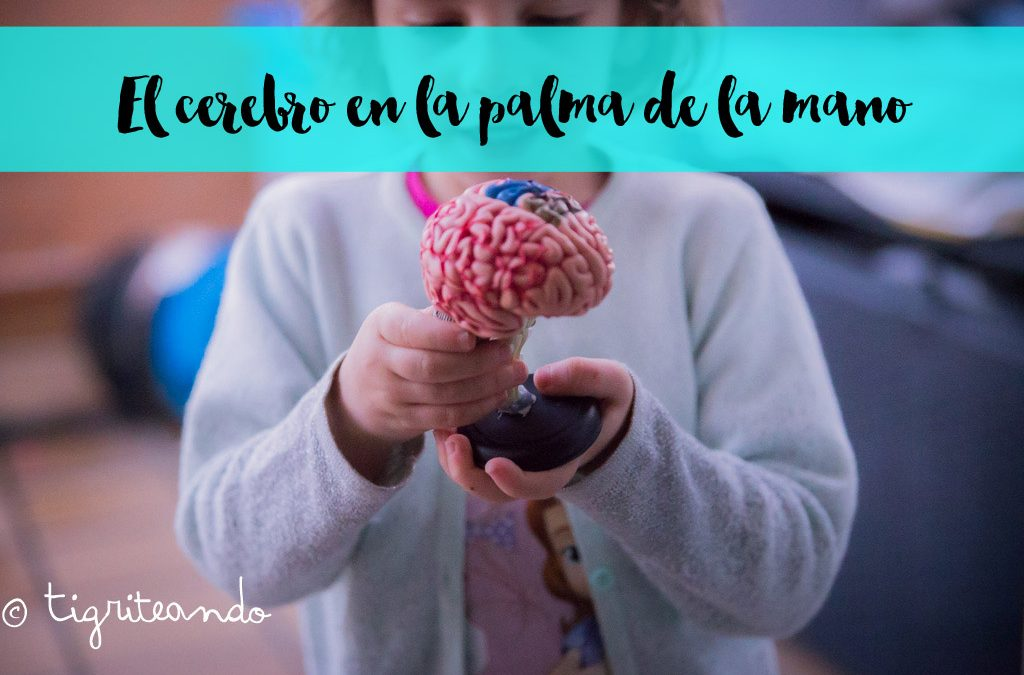 Aprendiendo sobre el cerebro con la palma de nuestra mano