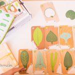 Creative Nature: Botánica con Miniland
